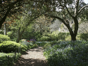 Garden path: Path through an English garden in spring.