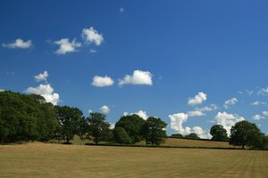 Summer meadows: Meadows in West Sussex, England, in summer.