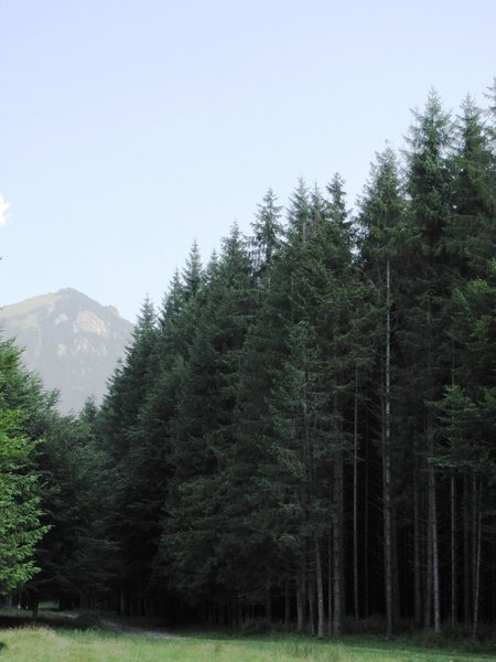 forest: Romanian forest, Cheia – Romania