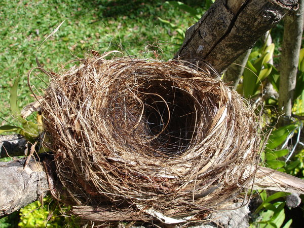 Empty nest 2: Empty bird nest