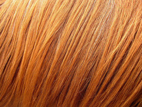 redhead: coarse red 'hair' of a horse's mane