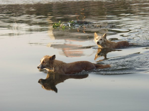 river dogs: All of my non human subject photos are unrestricted so you do not need to contact me for permission. If you are planning on using a photo with people, please contact me in advance. Please mind that I will not allow them to be used for any religious purpos