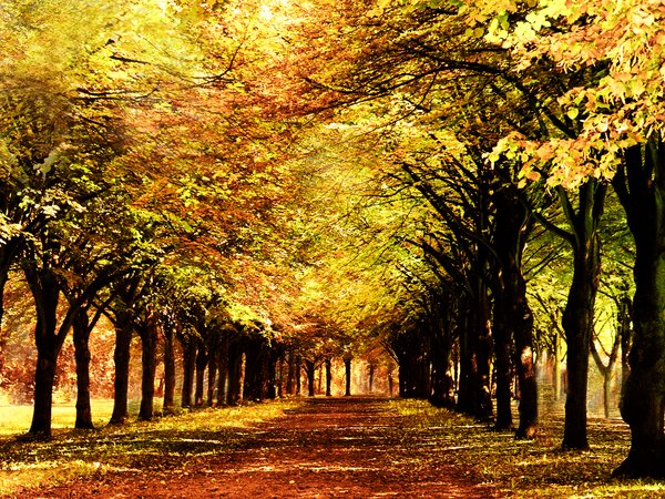 Fall forest: scenic fall forest lane