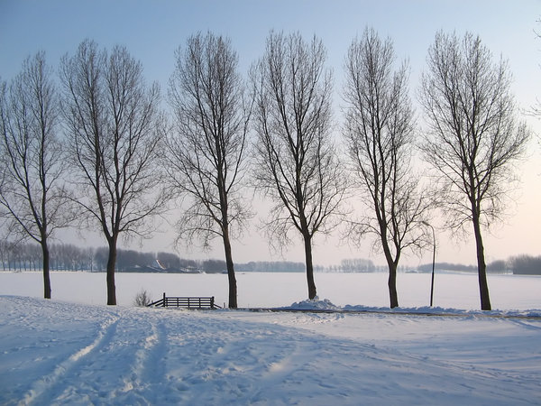 Trees in snow: Winter 2005, Holland
