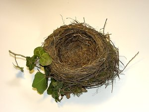 Blackbirds Nest (abandonned)
