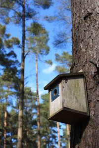 Bird box: View of a bird box in coniferous woodland