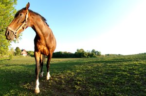Horse: Horse from the point of view of a fish - fisheye lens is used.