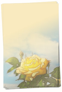 Yellow Rose Paper