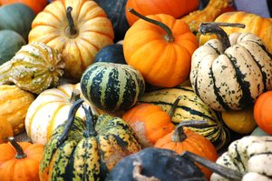 Pumkins, squashes & gourds 1