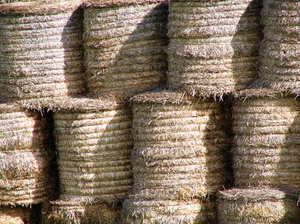 Straw Bales 2: Straw bales stacked and waiting