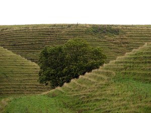 In them hills: Tree in the hills