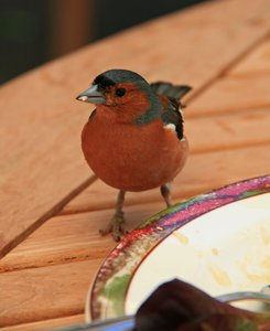 Birds: Birds at a cafe