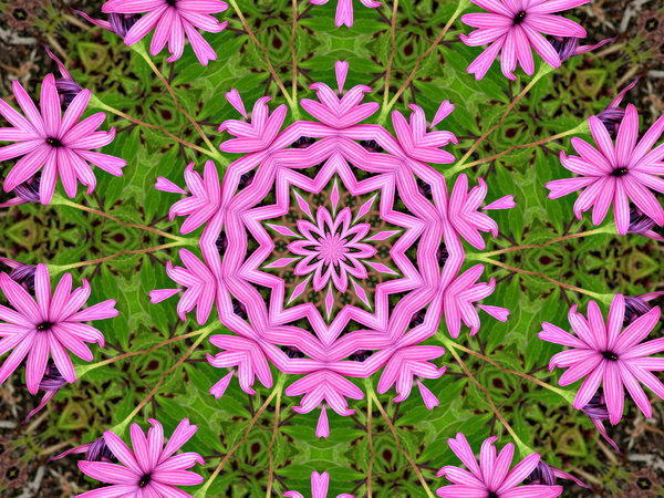 pink daisy garden circle: abstract backgrounds, textures, patterns, kaleidoscopic patterns, circles, shapes and  perspectives from altering and manipulating images