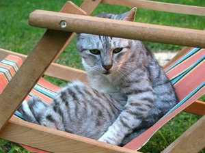 cat in deckchair