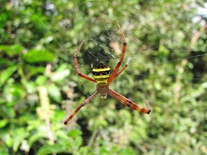 Spider: no description