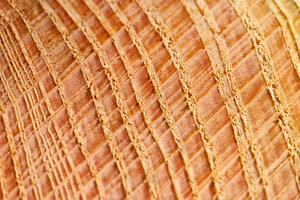 Wood texture: slice of wood close-up