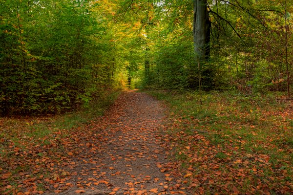 Autumn forest path - HDR: Paths in the autumn colored forest. The picture is HDR.