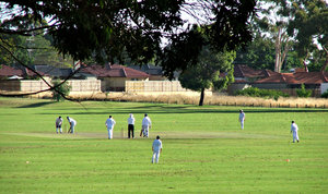 suburban cricket game