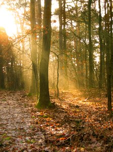 sunbeams in the forest 2