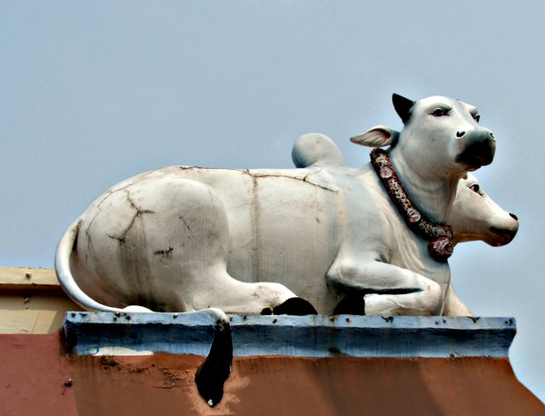 temple sacred cattle: rooftop corner decoration of lifesized sacred cattel