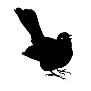 Silhouette Blackbird: a singing blackbird
