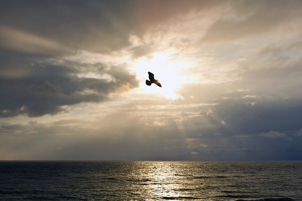 Enlightenment: Bird soaring in front of the sun. Taken Panama City Beach, Fl.