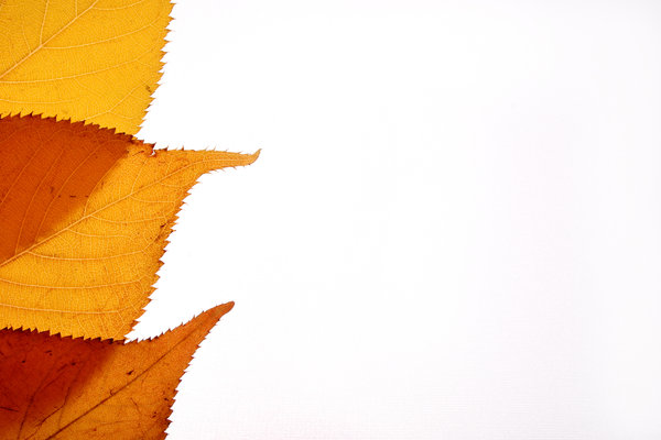 Three Leaf Border: Background made from autumn leaves
