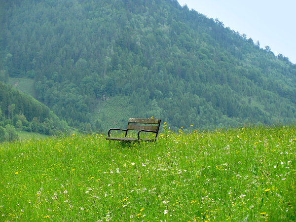 bench in nature: lonely bench on an untouched green meadow