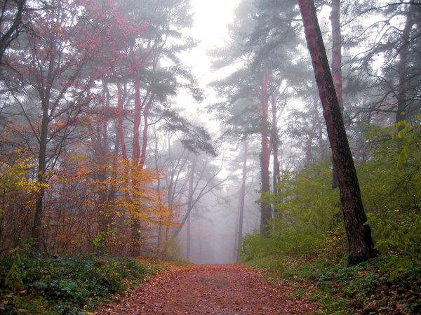 misty forest: