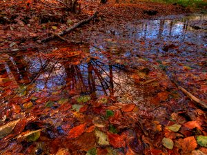 Autumn pond - HDR
