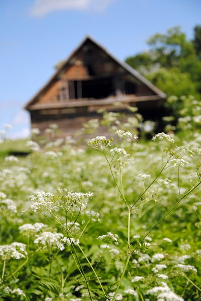 Village: Barn in the meadow. In Lithuanian village.
