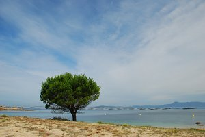 Tree in the beach