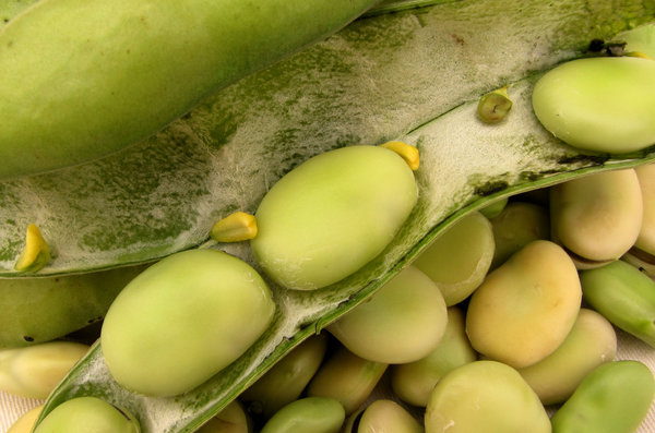 broad beans: raw uncooked shelled broad beans