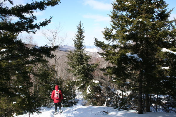 Winter walk: Someone walking with snowshoes in winter on a sunny day at Mont St-Bernard, Québec, Canada.