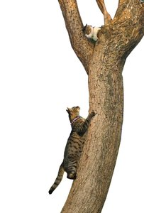 two cats on a tree