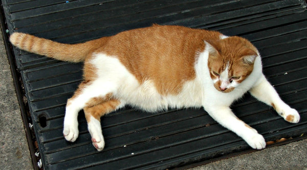 relaxed alley cat: relaxed but alert alley cat