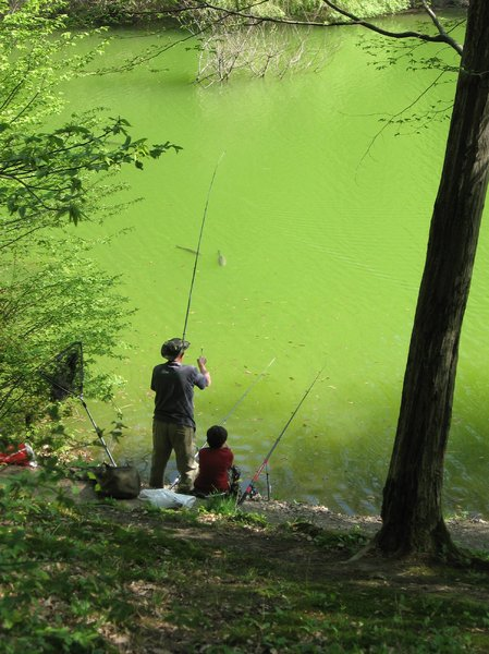 fishing in the pond: