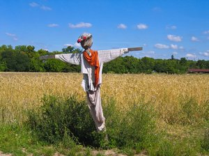 scarecrow at wheat field