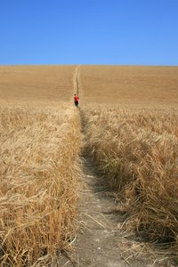 Walking through barley