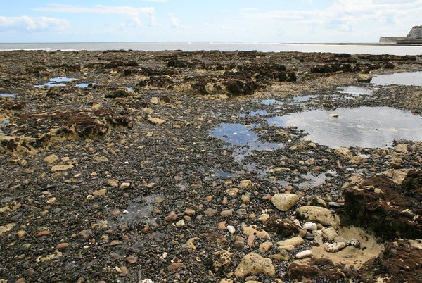 Rockpools and shellfish