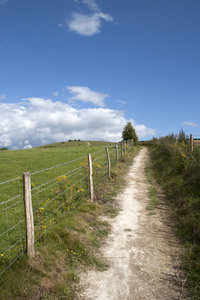 Rural footpath: A footpath on the South Downs, West Sussex, England.