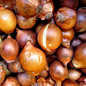 pickling onions: bulk quantity of small brown onions used for pickling