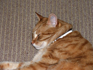 sleepy lounge cat: ginger tabby sleeping on indoors lounge seat