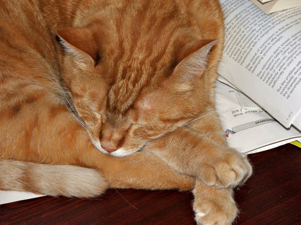 tiring book & paper work: cat asleep on desk with books and papers