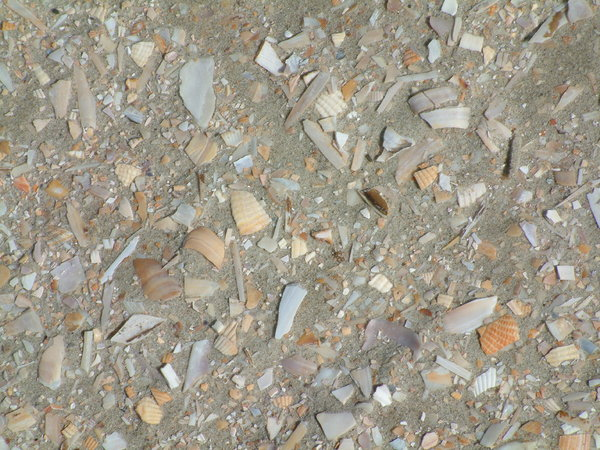 Broken Shells: Little Parts of shells in the sand