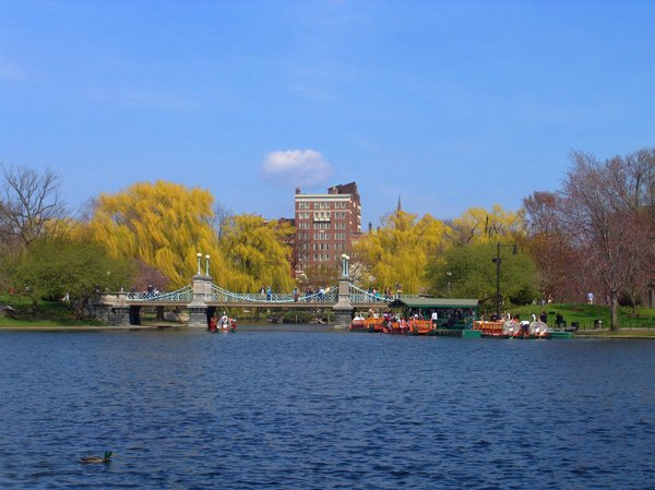Bridge and Swan Boats: Swan Boats and bridge located within the Boston Public Park - in the heart of the city is a welcome area to enjoy a lunch or evening walk, early Spring.