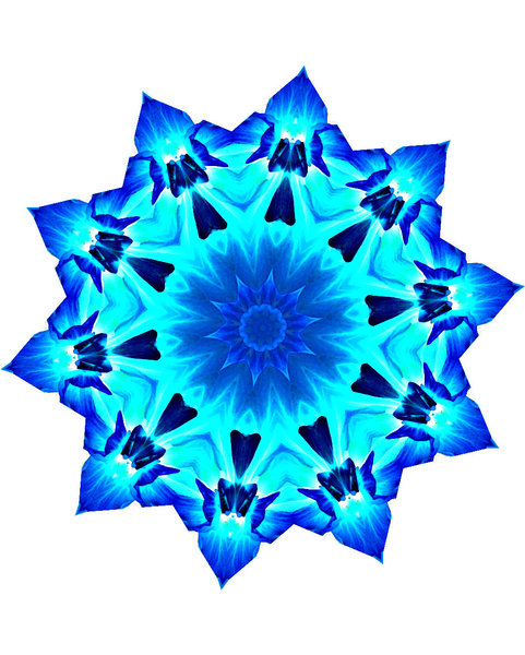blue alien flower