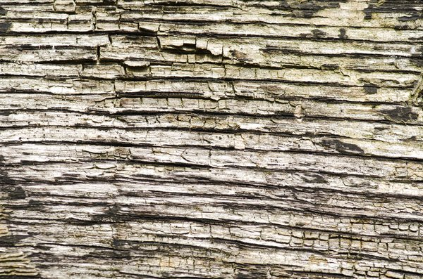 Cracked wood texture: Dry wood background