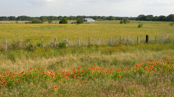 Texas Prairie: Blanket-flower and black-eyed-susans somewhere between Waco and Mexia, Texas.