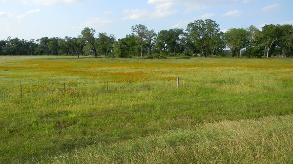 Texas Prairie: Some blanket-flowers and black-eyed-susans between Waco and Mexia, Texas.